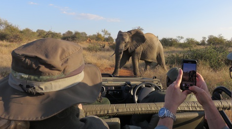 Wildlife Expert Safari Masodini Game Lodge, Balule Nature Reserve, Greater Kruger National Park