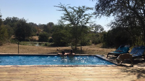 Masodini Private Game Lodge Balule Nature reserve swimming pool